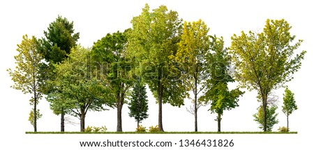 Green trees isolated on white background. Forest and foliage in summer #1346431826