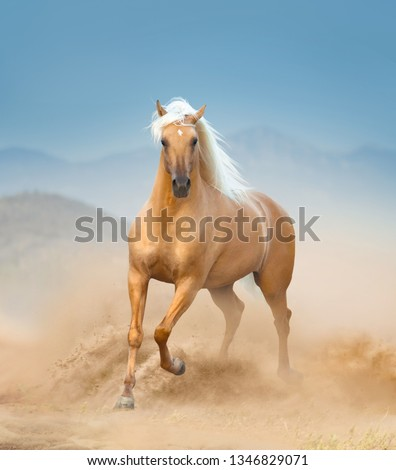 The palomino andalusian horse running in desert #1346829071