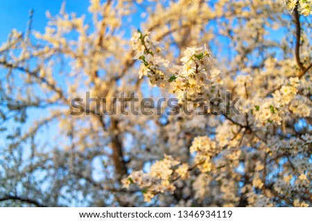 Vibrant blossom in the spring with many colorful flowers close up #1346934119