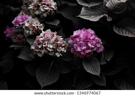 hydrangea in the garden #1346974067