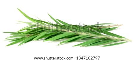 fresh tea tree isolated on white background #1347102797