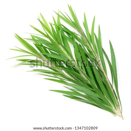 fresh tea tree isolated on white background, top view Royalty-Free Stock Photo #1347102809