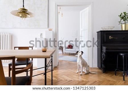 Stylish scandi interior of home space with design wooden table, chairs, sofa and gold pendant lamp. Living room with design accessories and piano. Beautiful dog sitting on the parquet. Elegant decor #1347125303
