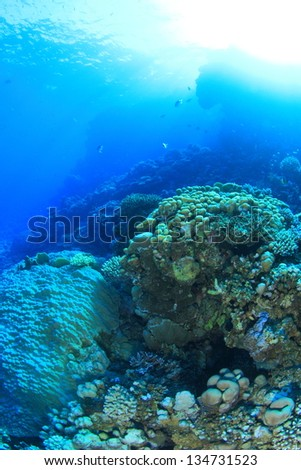 Marine Life in the Red Sea #134731523