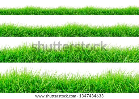 Green Grass Border isolated on white background.The collection of grass.(Manila Grass)The grass is native to Thailand is very popular in the front yard. #1347434633