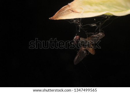 Fly dead ex prey spider #1347499565