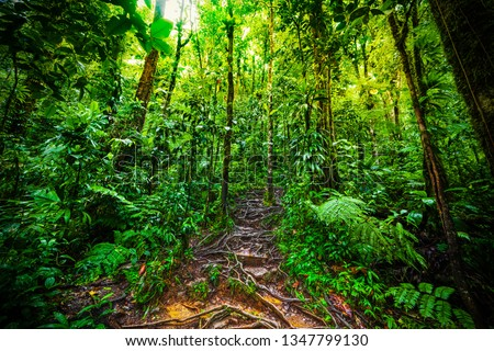 Roots and luxuriant vegetation in Basse Terre jungle in Guadeloupe, French west indies. Lesser Antilles, Caribbean #1347799130