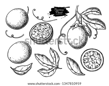 Passion fruit vector drawing set. Hand drawn tropical food illustration. Engraved summer passionfruit objects. Whole and sliced maracuya. Botanical vintage sketch for label, juice packaging design #1347810959