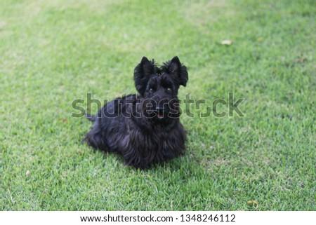 Philomena playing in the yard #1348246112