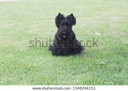 Philomena playing in the yard #1348246115