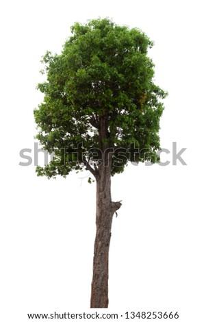 Isolated tree on white background #1348253666