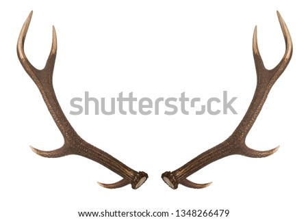 Antler isolated on white background. Large deer antlers on white background. Royalty-Free Stock Photo #1348266479