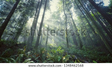 Beautiful Green Forest  #1348462568