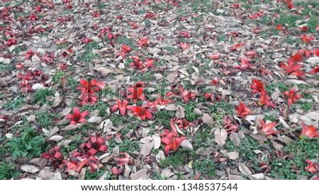 beautiful flower fallen on ground #1348537544