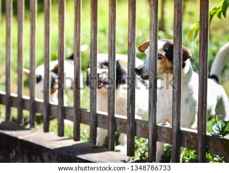 The dog looking outside waiting for the owner in fence front yard at home - sad dog animal pet #1348786733