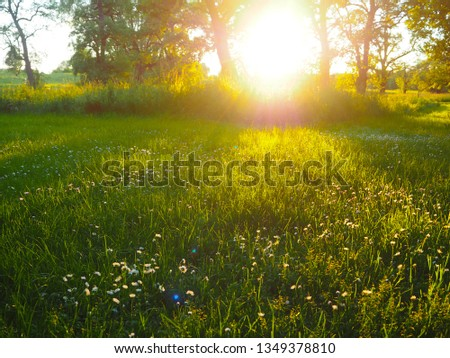 Illuminated meadow with daisies and trees in the background #1349378810