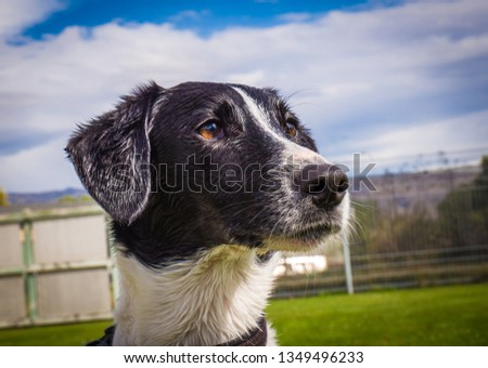 Dog Faces Black and White #1349496233