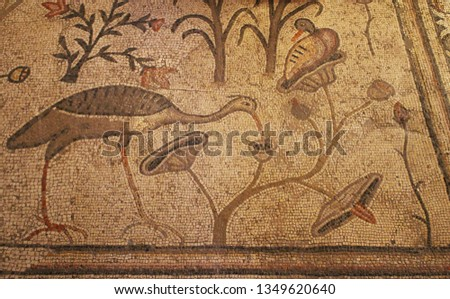 Tabgha, Israel - 4/8/2015: The Church of the Multiplication of the Loaves and Fish, Part of the Byzantine mosaic floor, Tabgha #1349620640