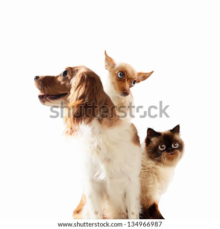 Three home pets next to each other on a light background. funny collage #134966987