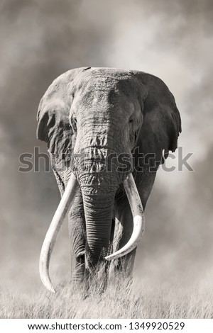 Giant tusked bull elephant, Tusker Tim,  in Amboseli, Kenya, in a cloud of dust. These super tuskers are almost poached out of existence, and only a handful remain that carry the super tusk gene.  Royalty-Free Stock Photo #1349920529