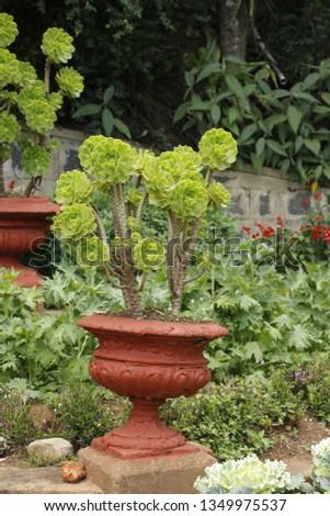 flowers  garden floral #1349975537