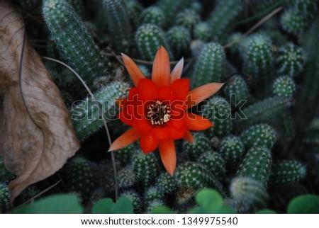 flowers  garden floral #1349975540