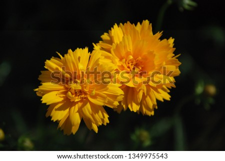 flowers  garden floral #1349975543
