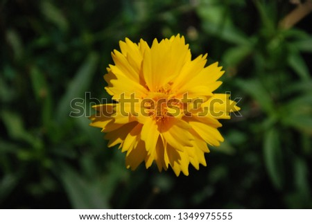 flowers  garden floral #1349975555
