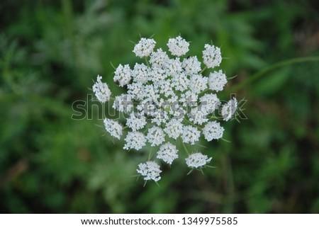 flowers  garden floral #1349975585