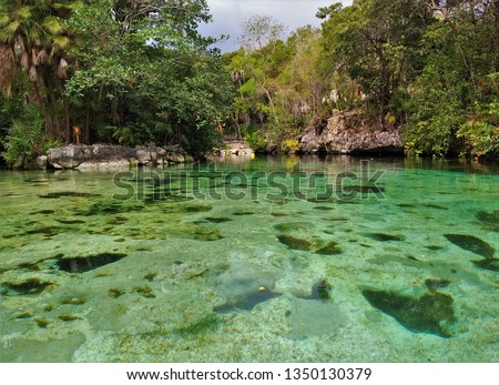 Clear turquoise water of Cenote Yax-Kin (Yax Kin) in Tulum, Yucatan, Mexico surrounded by lush tropical vegetation and jungle. Cenotes are natural sinkholes filled with water - popular tourist spots  #1350130379