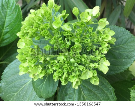 Green flowers with green leaf #1350166547