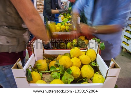 Just picked lemons with leaves waiting to be packaged in cardboard boxes in citrus factory #1350192884