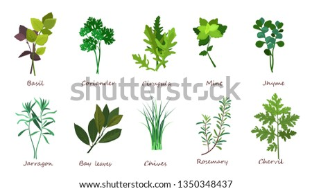 Cooking herbs illustration set. Basil, coriander, mint. Food concept. Can be used for topics like meal, plant, gourmet #1350348437