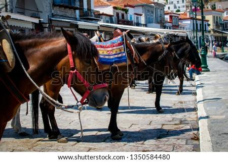 Donkeys on street #1350584480