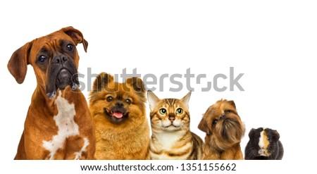 set of pets watch #1351155662