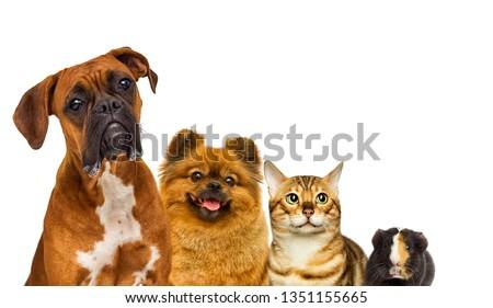 set of pets watch #1351155665