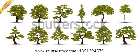 Collection  Realistic  Trees Isolated on White Background #1351394579