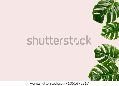 Tropical palm leaves on a pink background for designs. Summer Styled. High quality image. Top view #1351678217
