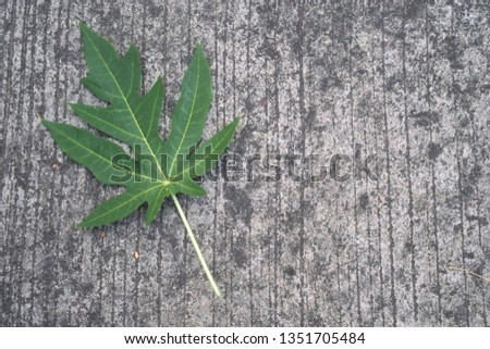 Papaya leaves on the cement floor, cement background, road cement #1351705484