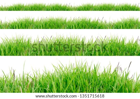Green Grass Border isolated on white background.The collection of grass.(Manila Grass)The grass is native to Thailand is very popular in the front yard. #1351715618