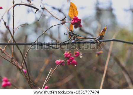 Pink berries on the wire. #1351797494