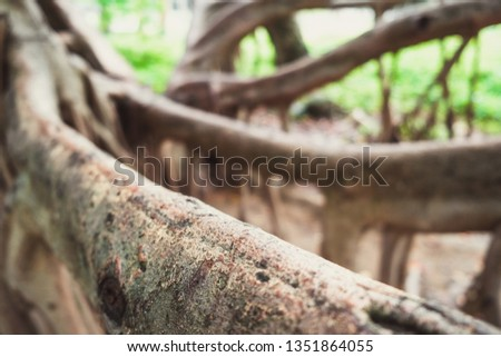 Close up of tree roots in the park #1351864055