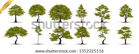 Collection  Realistic  Trees Isolated on White Background #1352325116