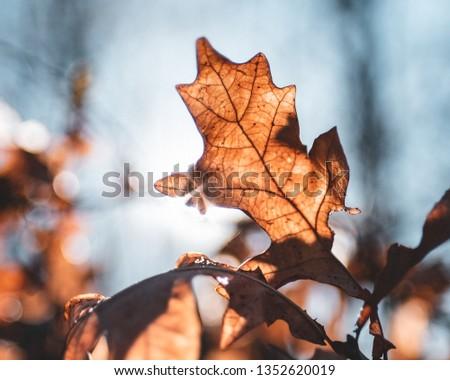 Leaf in sunlight early spring orange brown teal look #1352620019