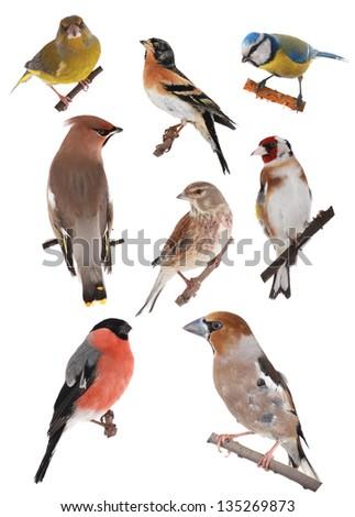 birds on a white background #135269873