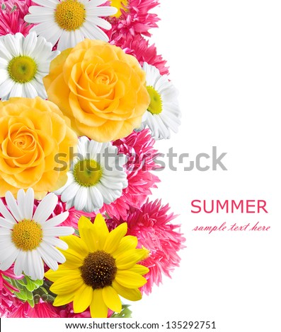 Aster, roses, sunflowers and chamomile flowers background isolated on white with sample text. Summer flowers #135292751
