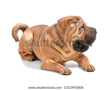 Cute funny dog on white background #1352943806