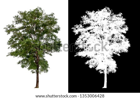 isolated tree on white background with alpha channel  #1353006428