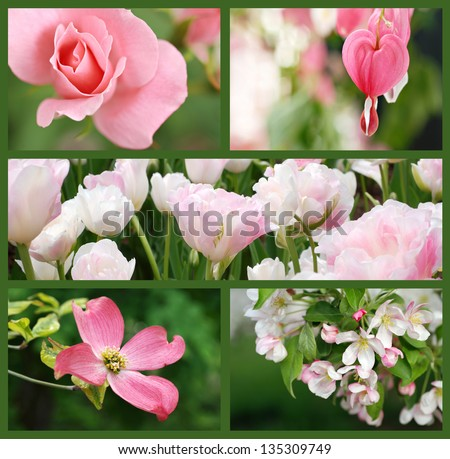 Collage of beautiful pink flowers (includes a rose, bleeding heart, double tulips, dogwood blossom, and apple blossom) taken outdoors in natural setting.