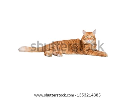 orange cat white isolated background with clipping path #1353214385